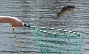 caught fish